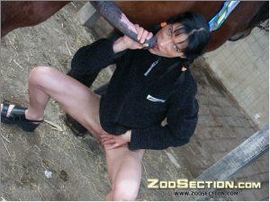 Фотоснимки зоо бабец с бирюзовыми глазками насыщается лошадиной липкой жидкостью