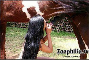 Фотографии zoo для мобильника с тертой звероёбкой и жеребцом