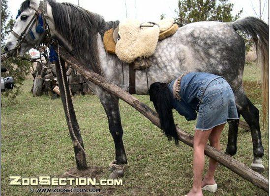 Horse zoo шлюшка в юбченочке делает минет мерину