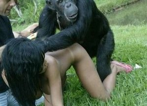 Две голые развратницы увлеченно трахаются с черной обезьяной смотрите зоопорно фото