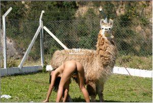 Приятная верблюдиха глазеет как дрочит блядюжка картинки зоопорно