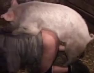 Porn zoo дикая свинья дрючит девку в помещении