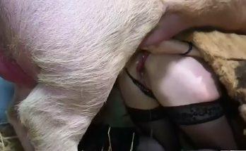 Он-лайн zoo porn кабанчик сношает зоофилку с широкой жопенью